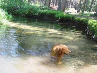 Sam Goes for a Swim