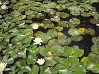 Lummis Pond