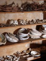 Abalone shells, skulls
