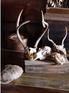 Skulls and tortoise shell