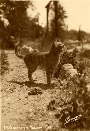 McGroarty's Famous Yellow Cat