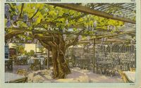 Grapevine post card