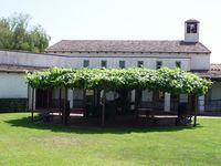 Old grapevine park