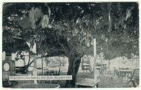 Grapevine 1911