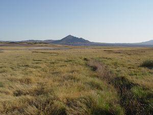 Tecopa Marshlands