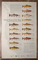 Trout chart