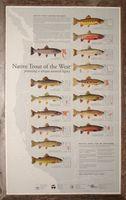 Trout chart