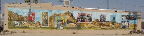 Desert Wildflowers Mural