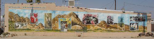 Desert Wildflowers Mural