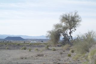 Amboy Crater and Shoe Tree